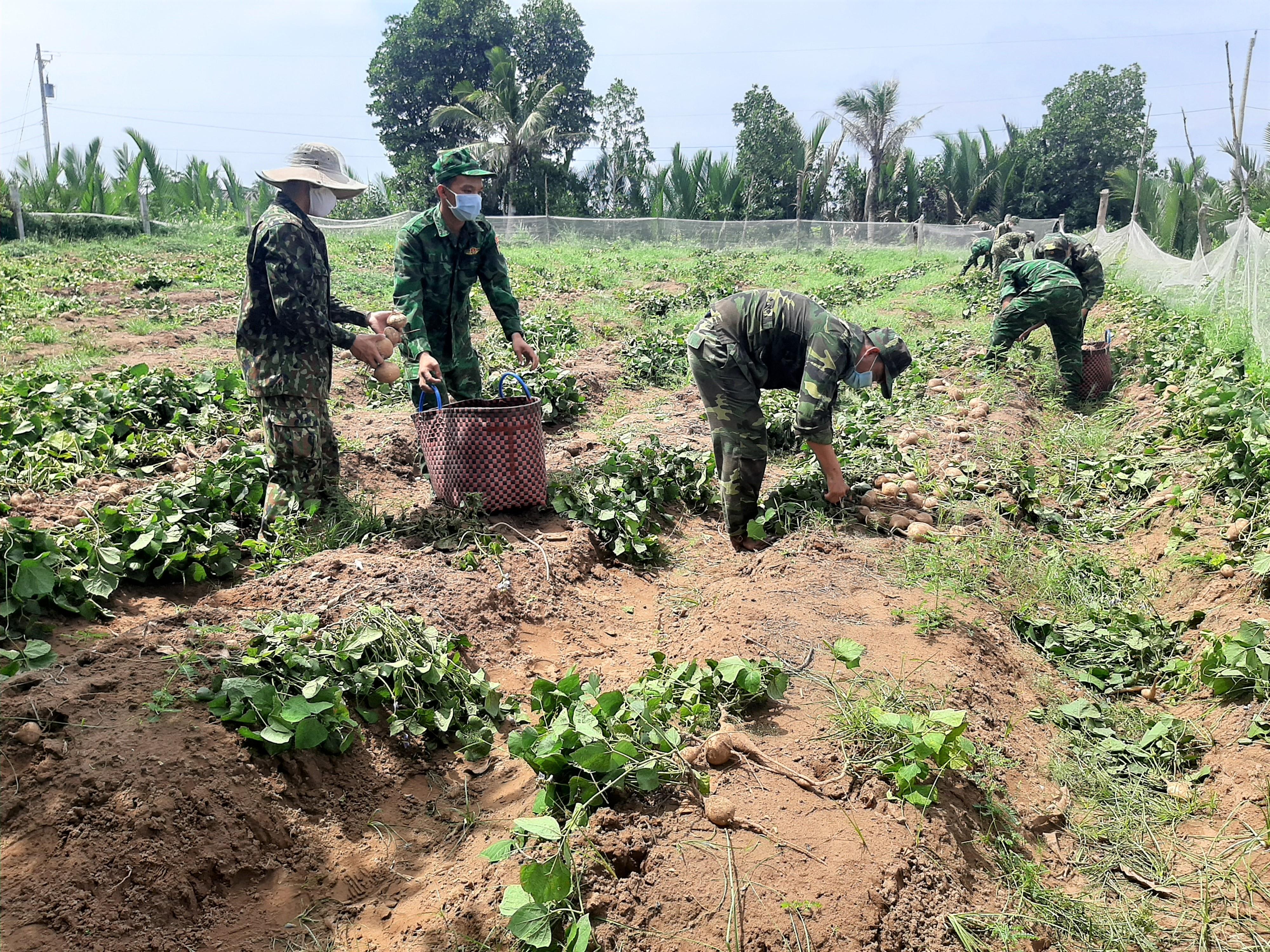 Hội Liên hiệp Phụ nữ tỉnh hỗ trợ nông dân Thạnh Phú tiêu thụ sắn
