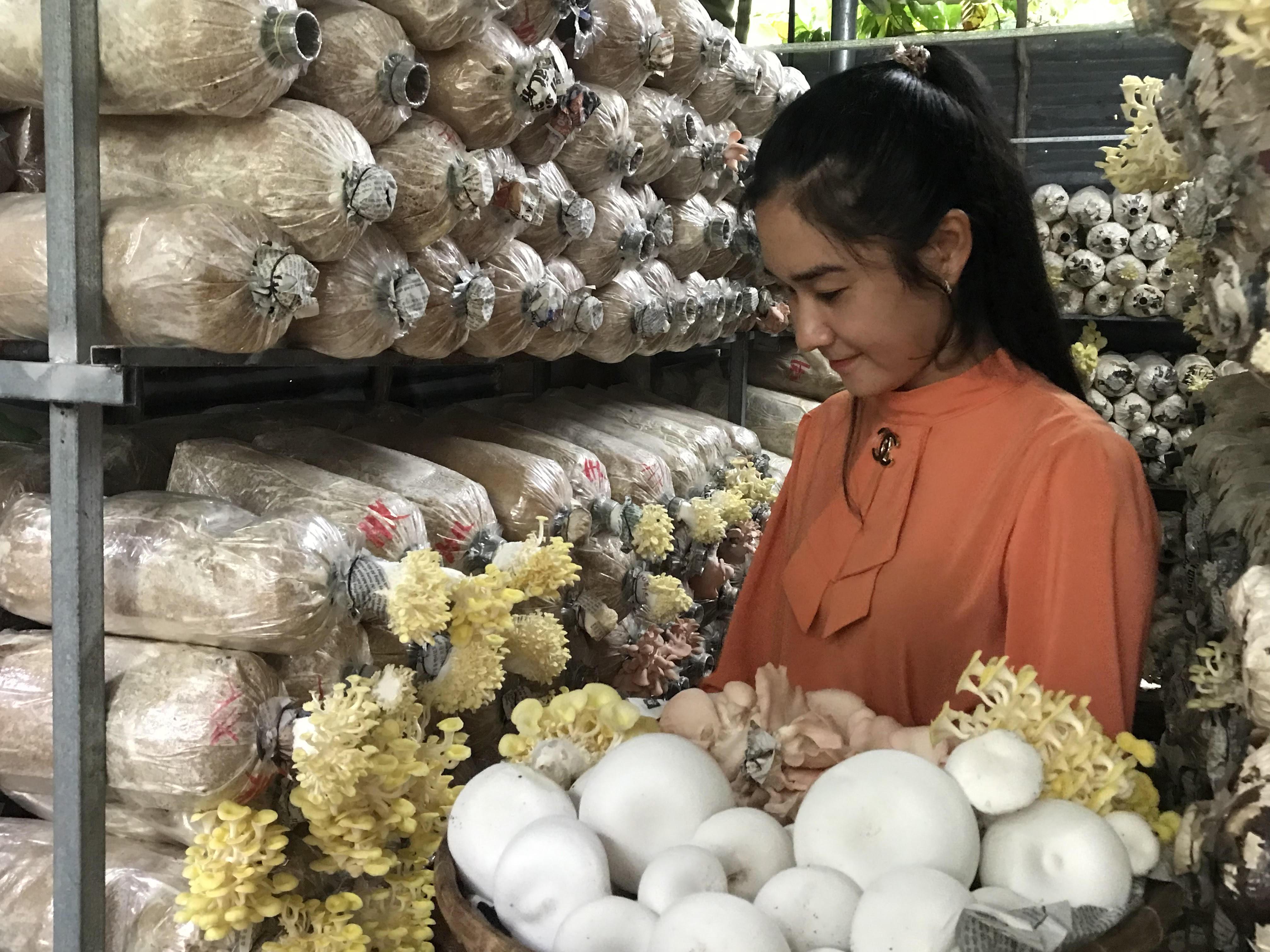 Khởi nghiệp với nghề trồng nấm sạch