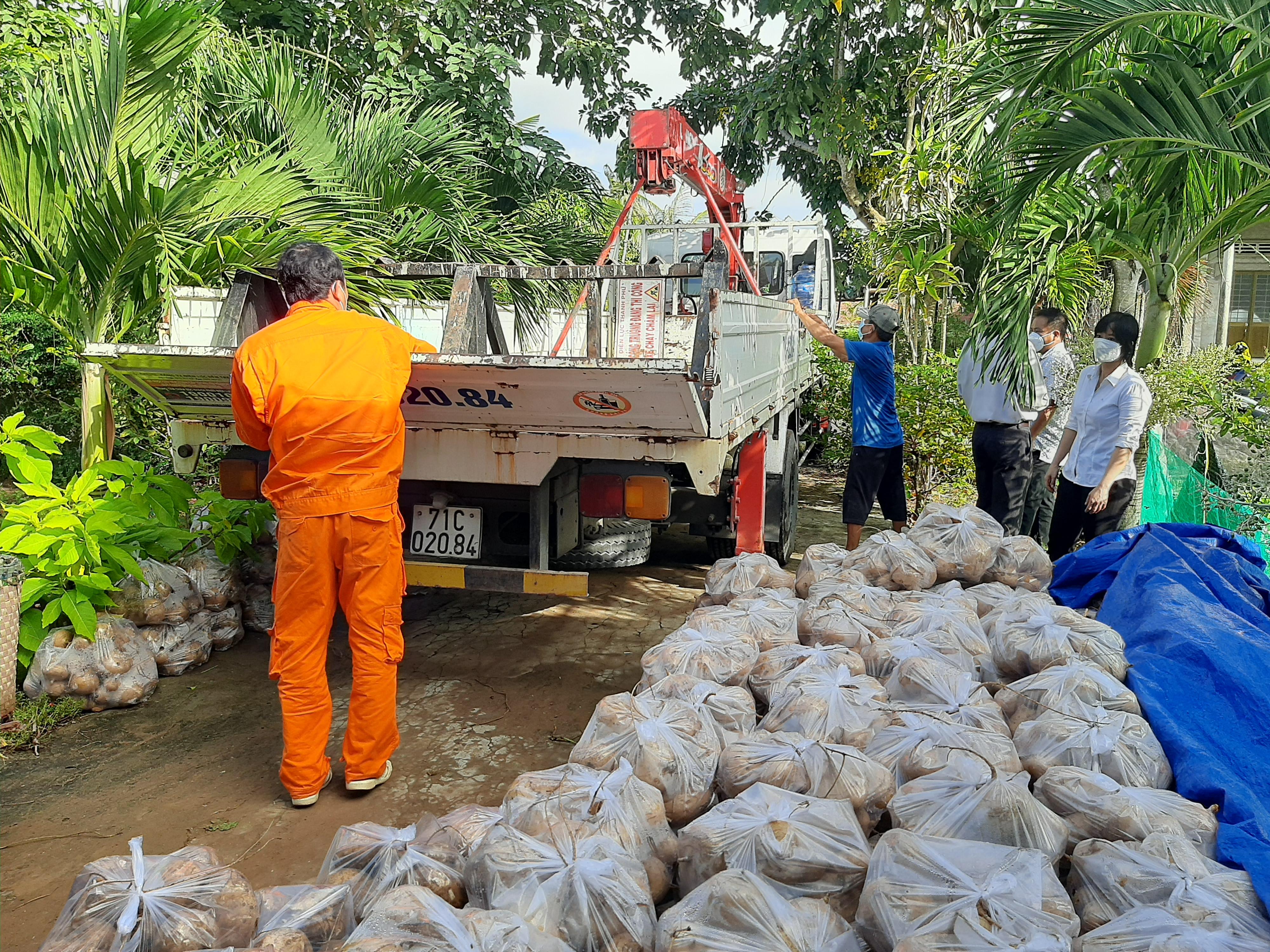 """Thạnh Phú: """"Chuyến xe 0 đồng"""" giúp nông dân vận chuyển sắn tiêu thụ"""
